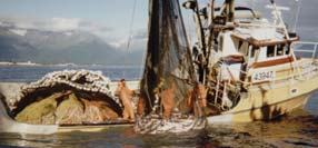 Photo of commercial fishing boat